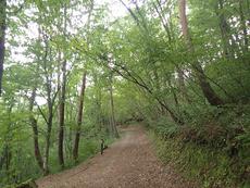 Uwano trail